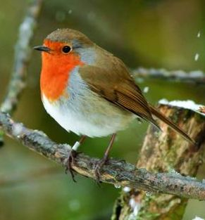 Christmas Bird.Shakespeare And The Birds At Christmas The Shakespeare Blog