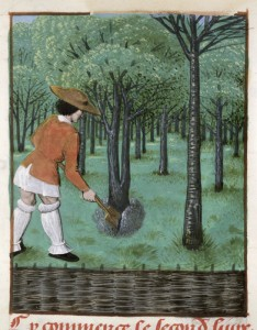 Man working in orchard Royal 14 E.VI, f.28
