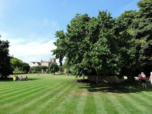 The Great Garden with the Mulberry Tree